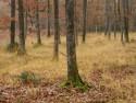 6% BTW voor begrazing van (natuur)gebieden door schapen in opdracht van landbouwers